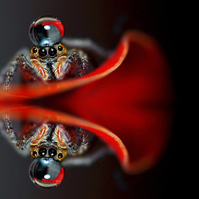 Spider...(oO^Oo)... by Bu Balus (nickyth13)) on 500px.com