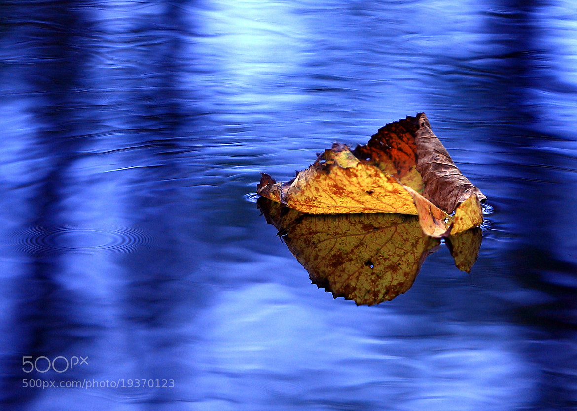 Photograph Goodbye Fall by yume . on 500px