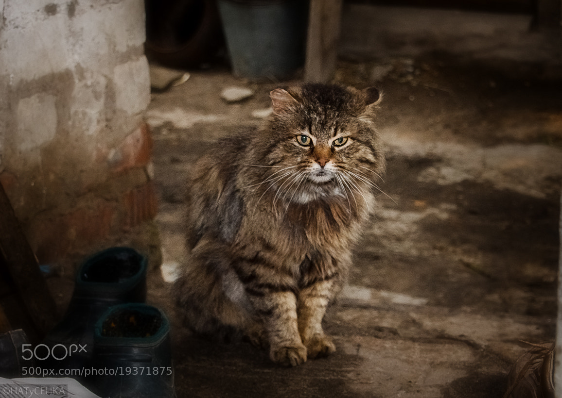 Photograph Rustic cat by HATyCEHKA  on 500px