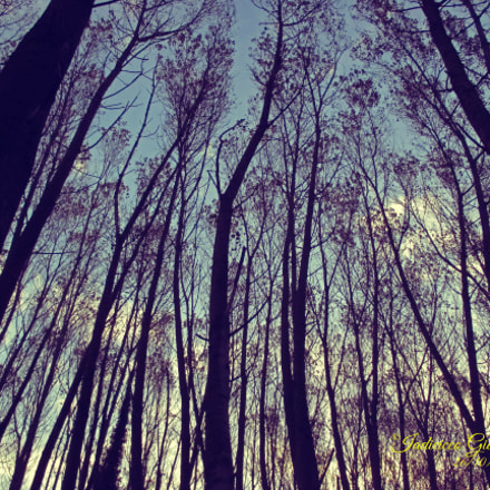 Colorfull forest, Canon IXUS 145