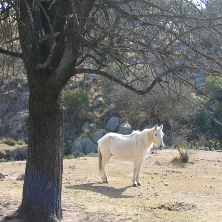 The White Horse, Canon POWERSHOT A85