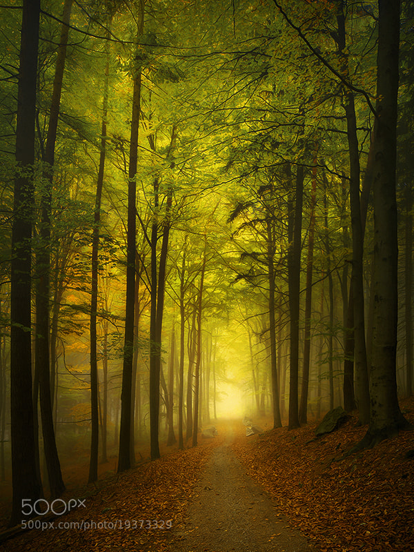 Photograph Beech Trail by Kilian Schönberger on 500px