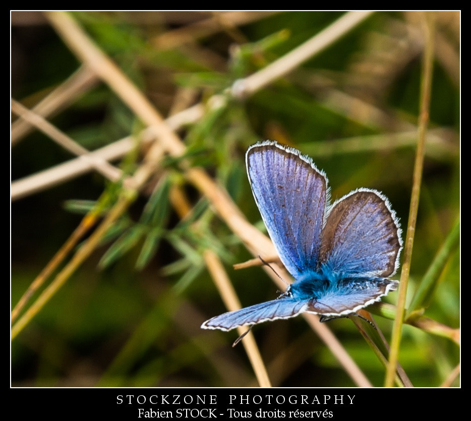 Photograph Butterfly - Summer 2012 by Fabien STOCK on 500px