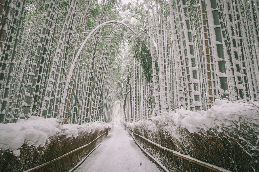Banboo forest Kyoto Japan by Yuu Photo