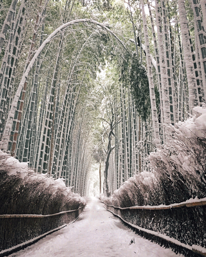 Banboo forest Kyoto Japan by YUU