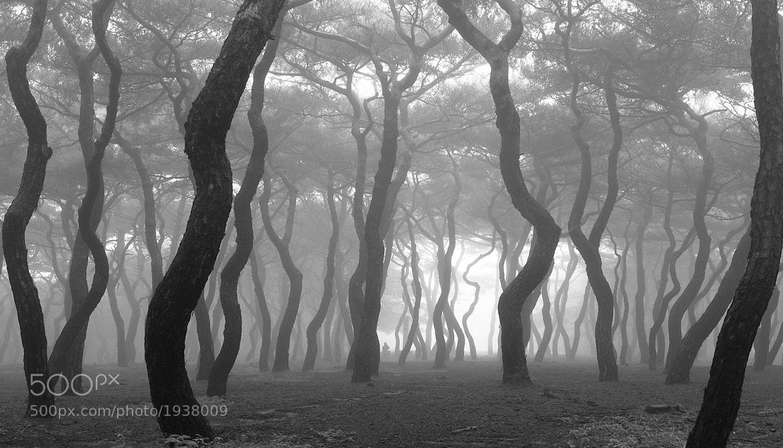 Photograph mist ... by il won choi on 500px