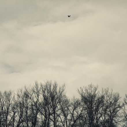 Lonely Bird Over The, Canon EOS 5D MARK II, Canon EF 35-80mm f/4-5.6