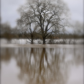 Reflection In A Flooded Field