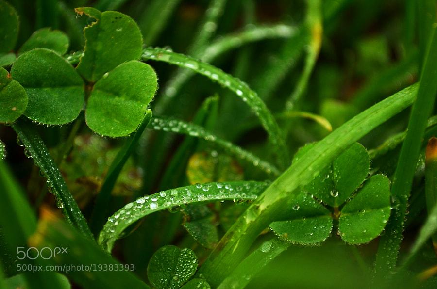 Green by Aleksandar Sheter (alexandarsh)) on 500px.com