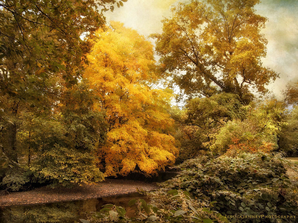 Photograph Autumn Creek by Jessica Jenney on 500px