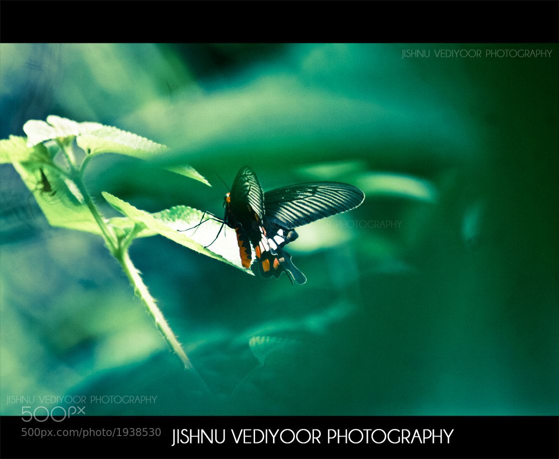 Photograph The Butterfly Effect  by Jishnu Vediyoor on 500px