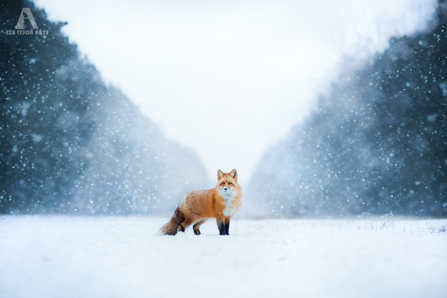 Winter by Iza ?yso? on 500px.com