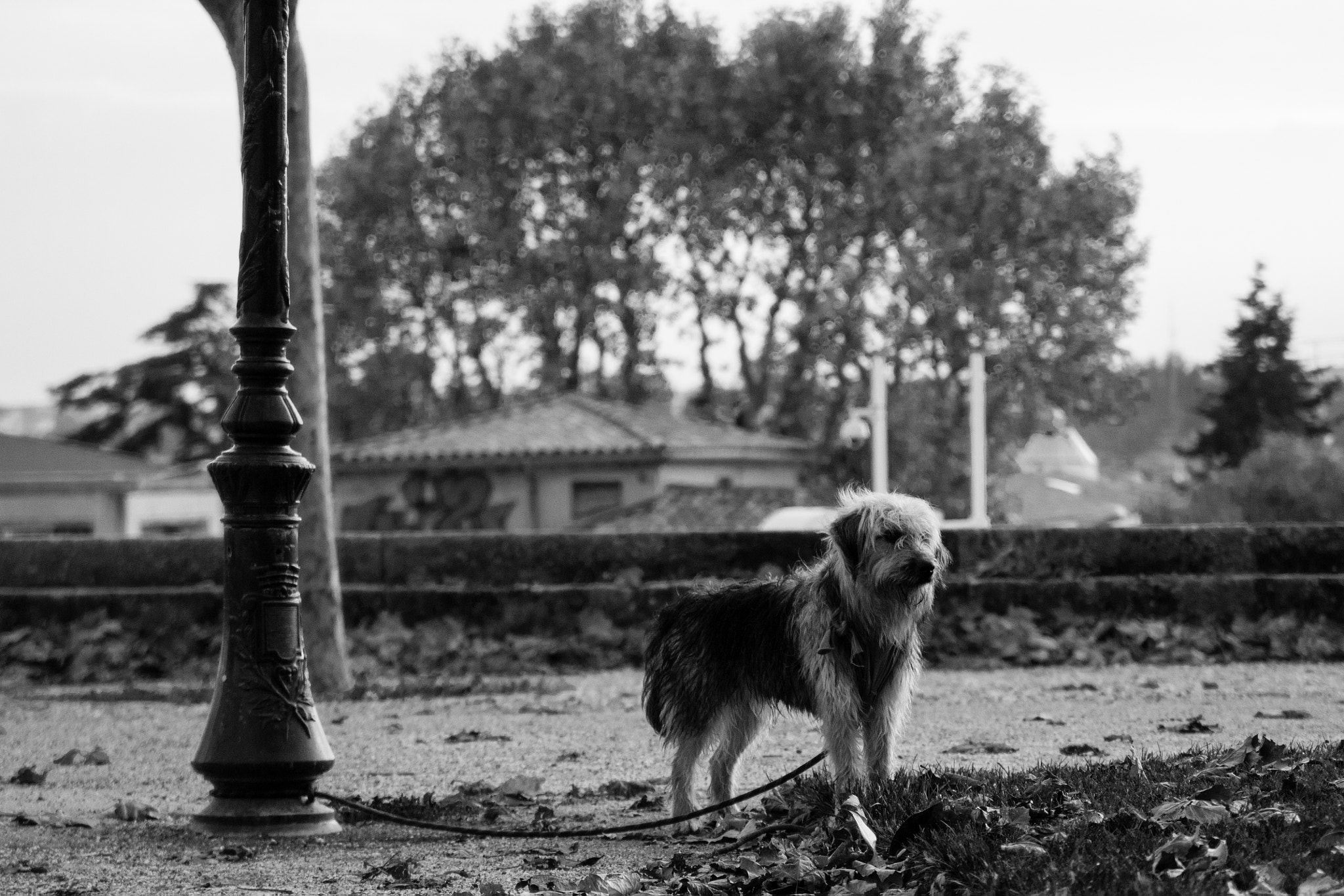 Photograph Lonely dog by Thibault Casano on 500px