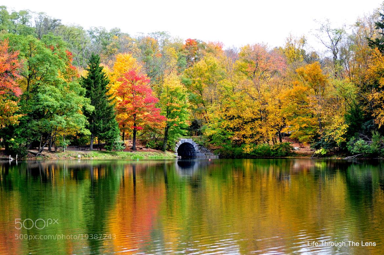 Photograph Fall Has Fallen by Jason John on 500px