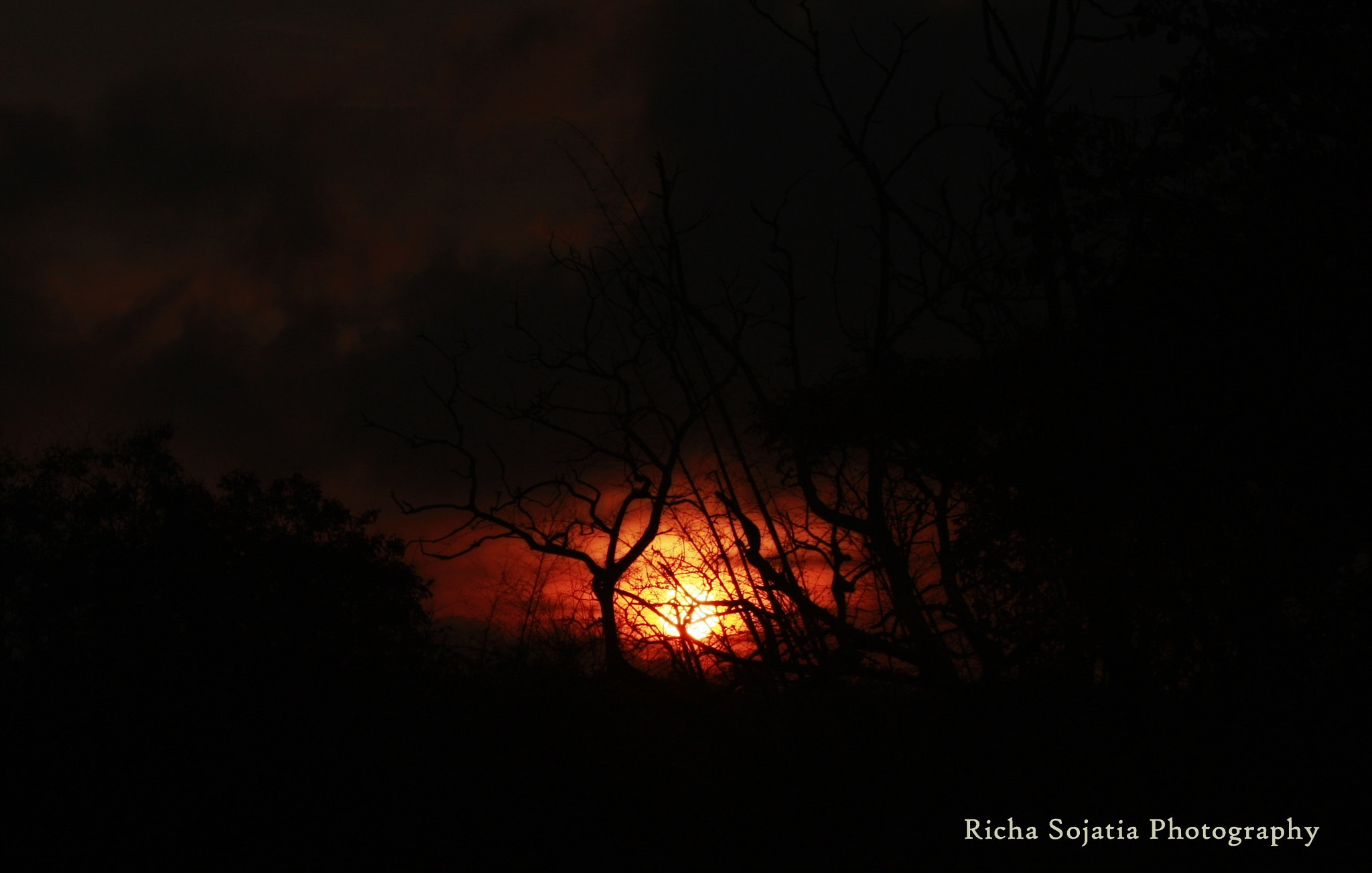 Photograph an african sunset type sunset :D  by richa  sojatia on 500px