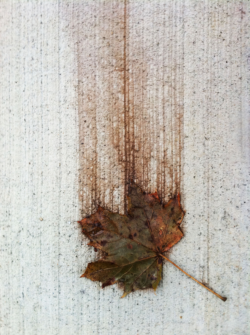 Photograph The Fall by Katherine Richmond on 500px