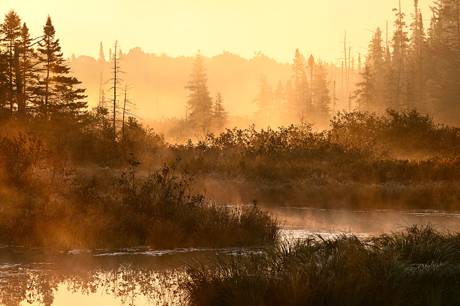 Photograph Morning Warmth by Kyle McDougall on 500px