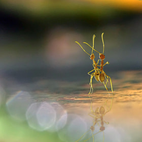 Dance Into The Light by teguh santosa (teguhsn)) on 500px.com