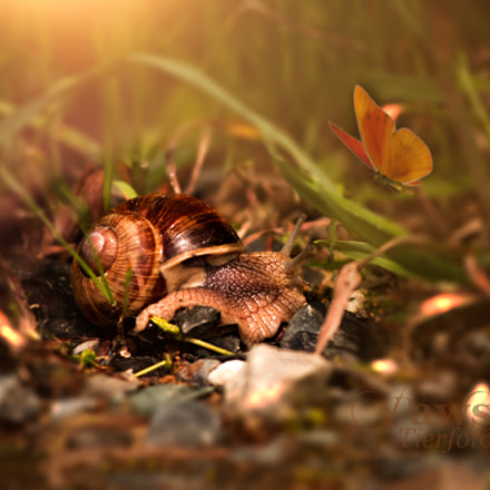 Snail, Canon EOS 70D, Canon EF 70-200mm f/4L IS