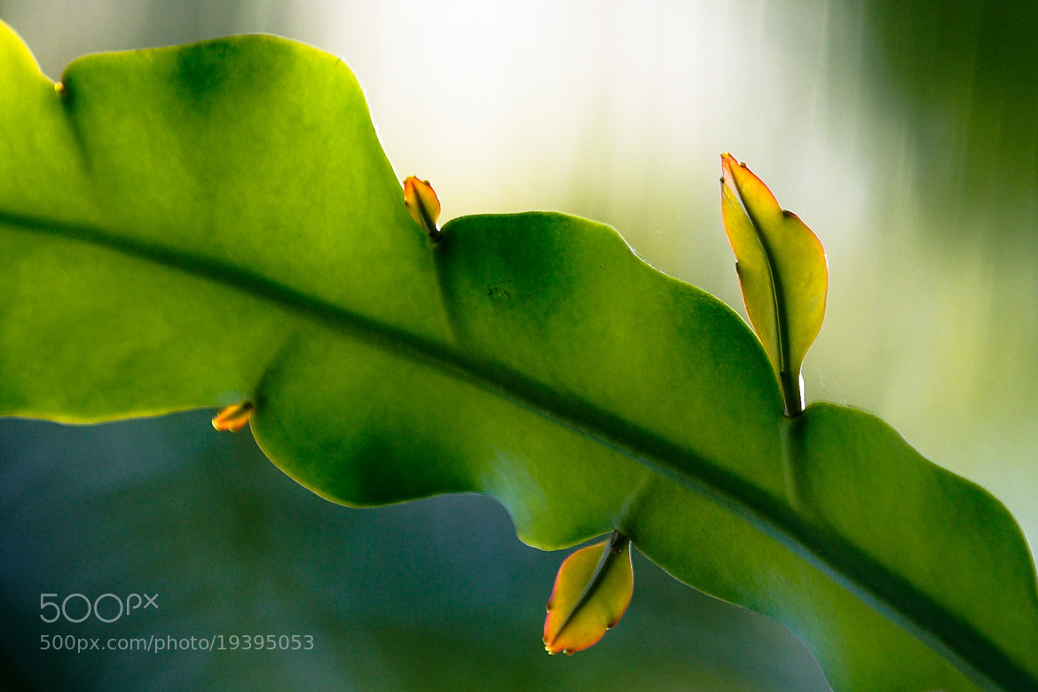 Photograph Untitled by Praveen V on 500px