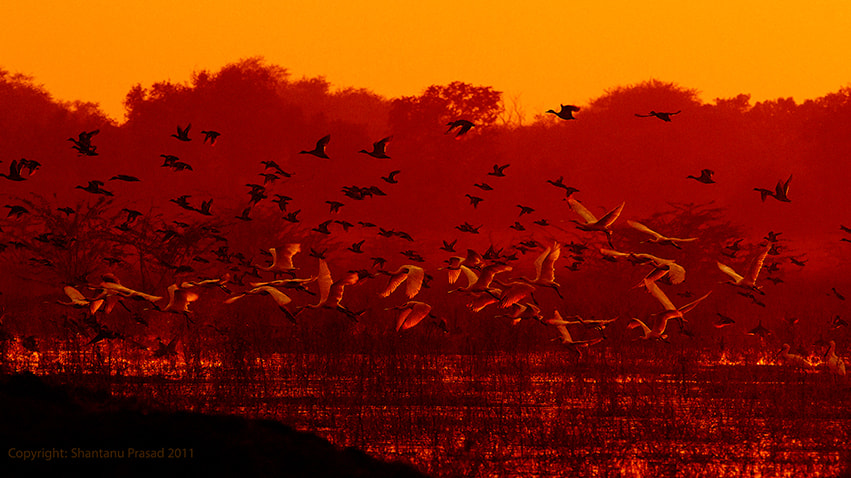 Photograph When Nature Mesmerized Me..... by Shantanu Prasad on 500px