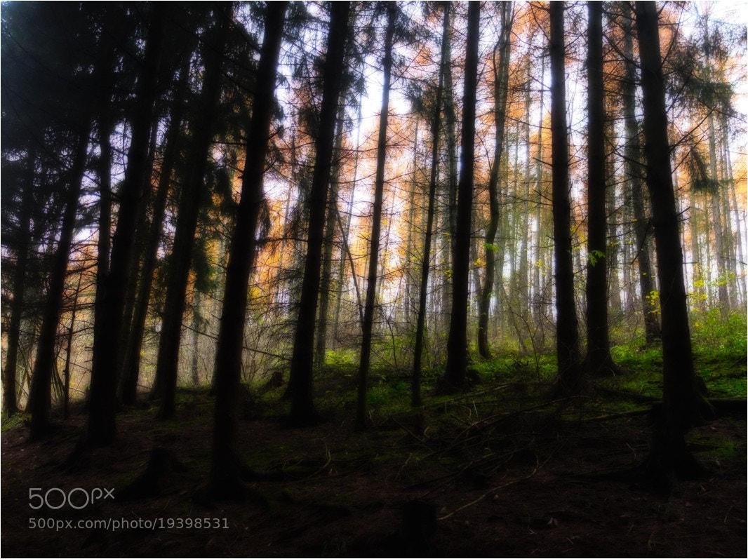 Photograph november forest by Ulrich Fleischer on 500px