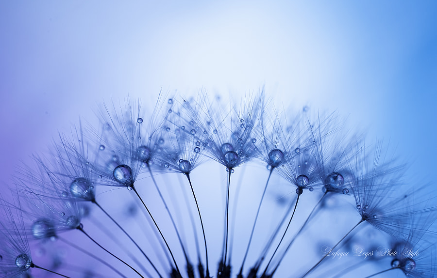 Halves Blues by Lafugue Logos on 500px.com
