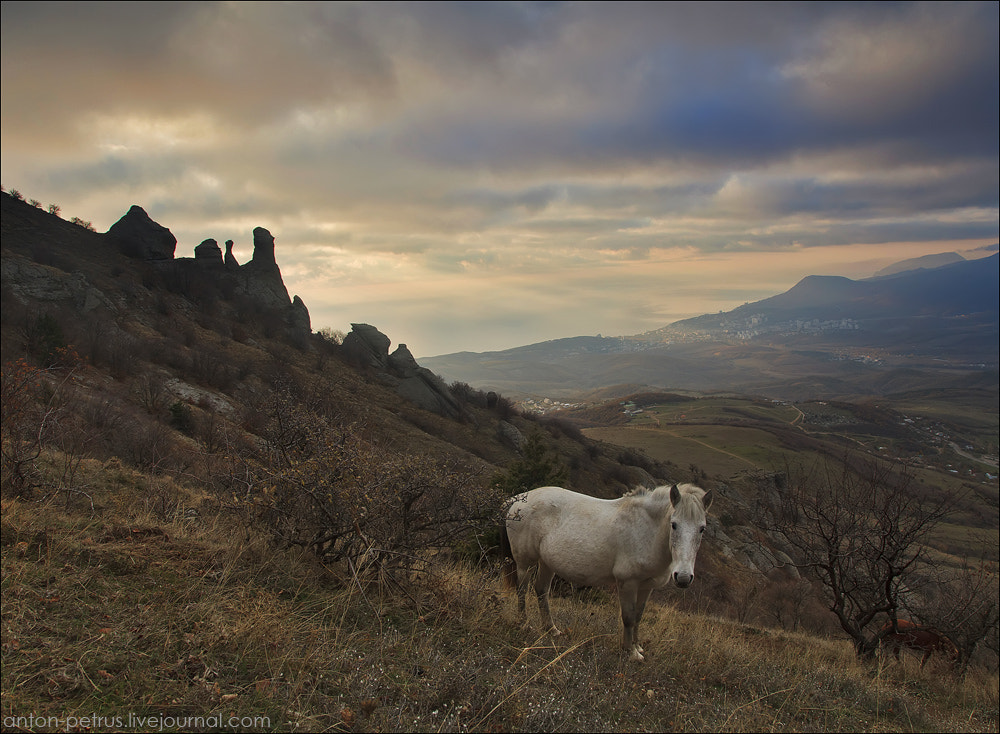 Photograph White ghost by Anton Petrus on 500px