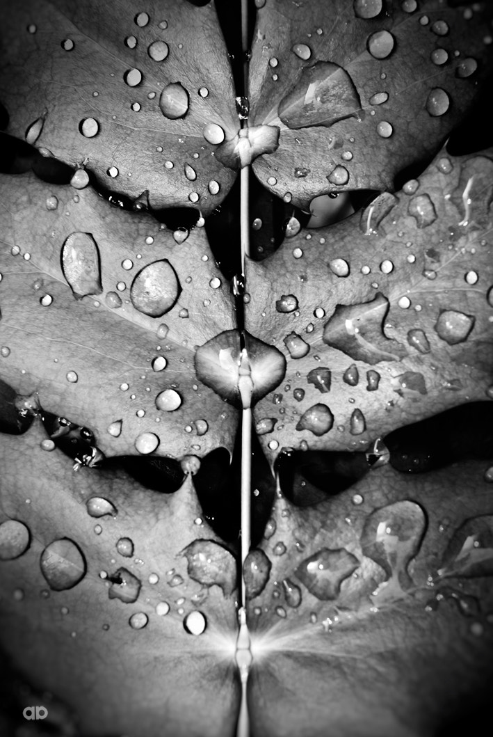 Photograph Raindrops 2 by Anne Bollwahn on 500px
