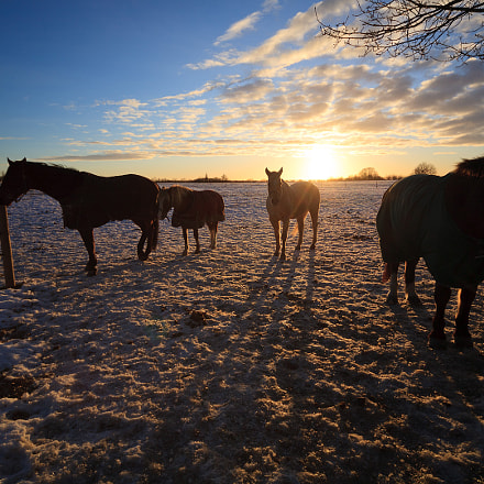 horses and long shadows, Canon EOS 5D, Sigma 12-24mm f/4.5-5.6 EX DG ASPHERICAL HSM