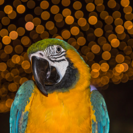 Macaw In The Night, Canon EOS 1200D, Sigma 17-70mm f/2.8-4.5 DC Macro