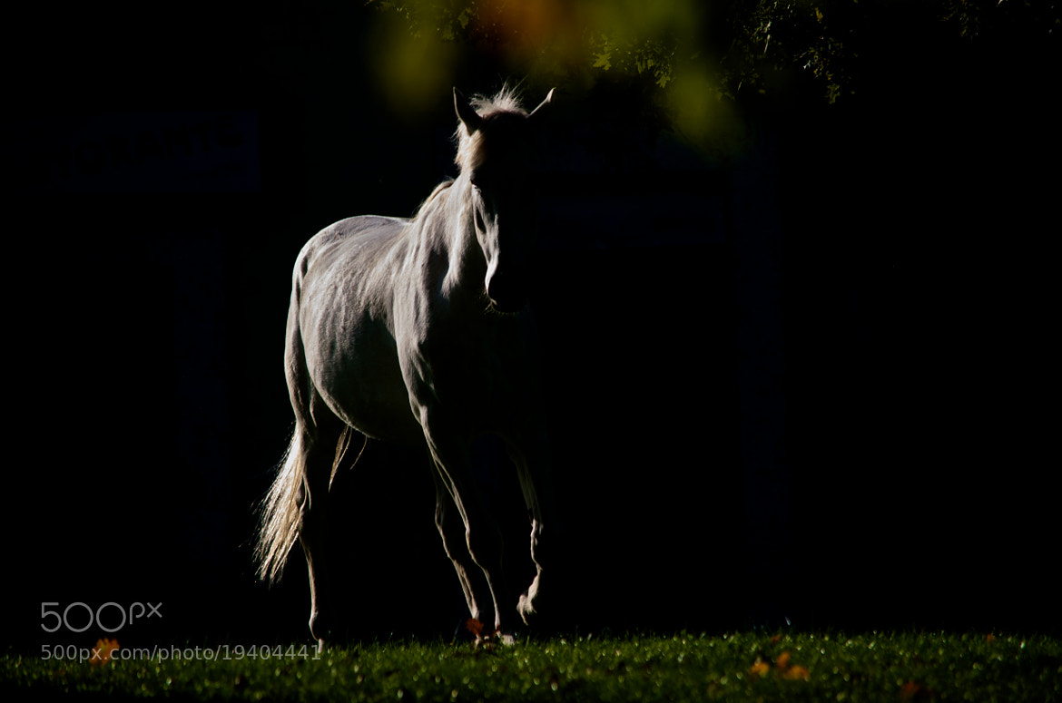 Photograph Pegasus by Domenico Mellozzi on 500px