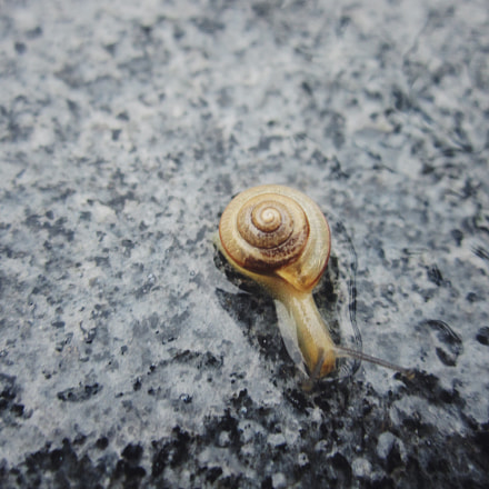 Snail in Water, Canon POWERSHOT SD940 IS