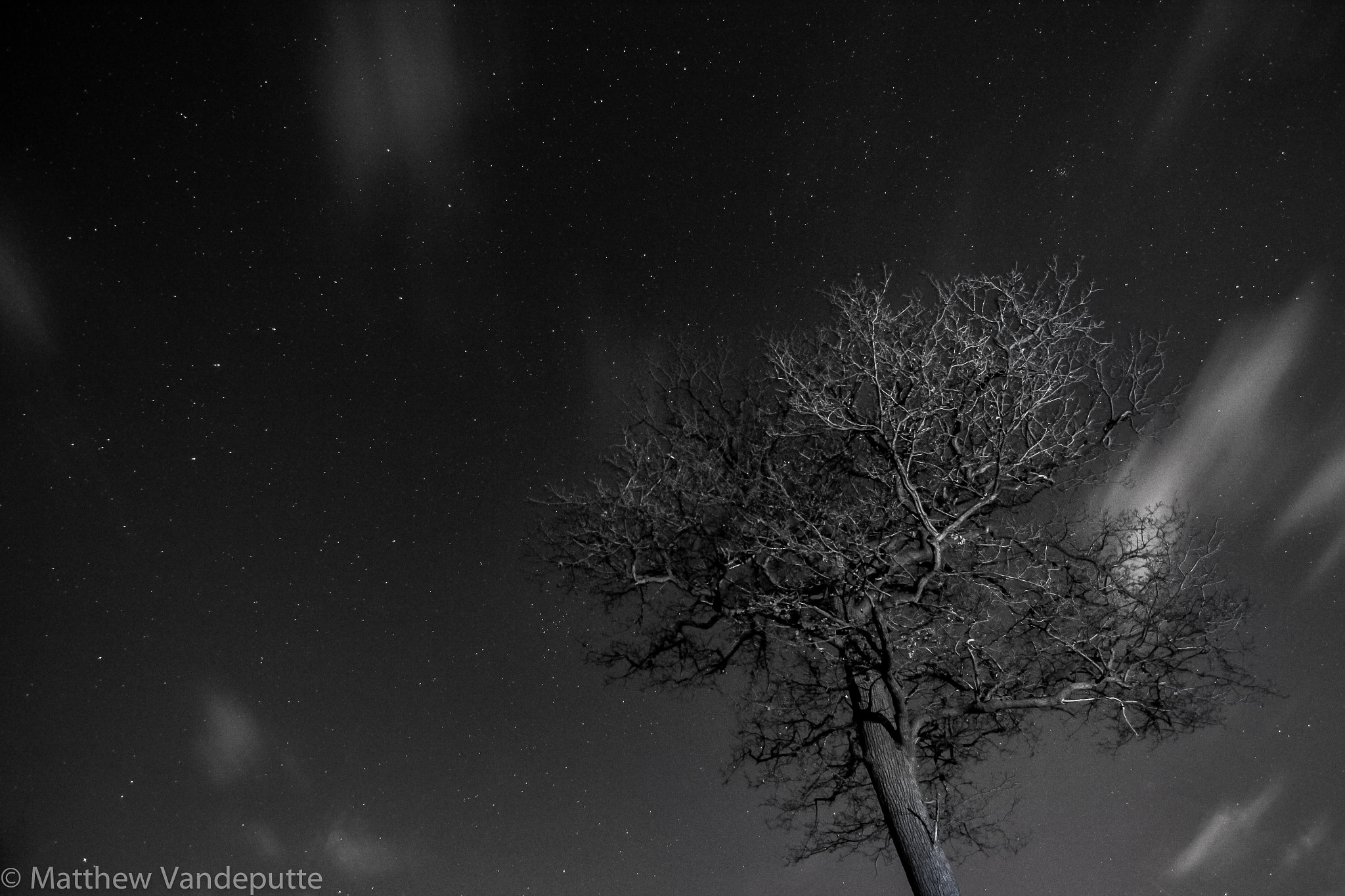 Photograph Starry tree. by Matthew Vandeputte on 500px