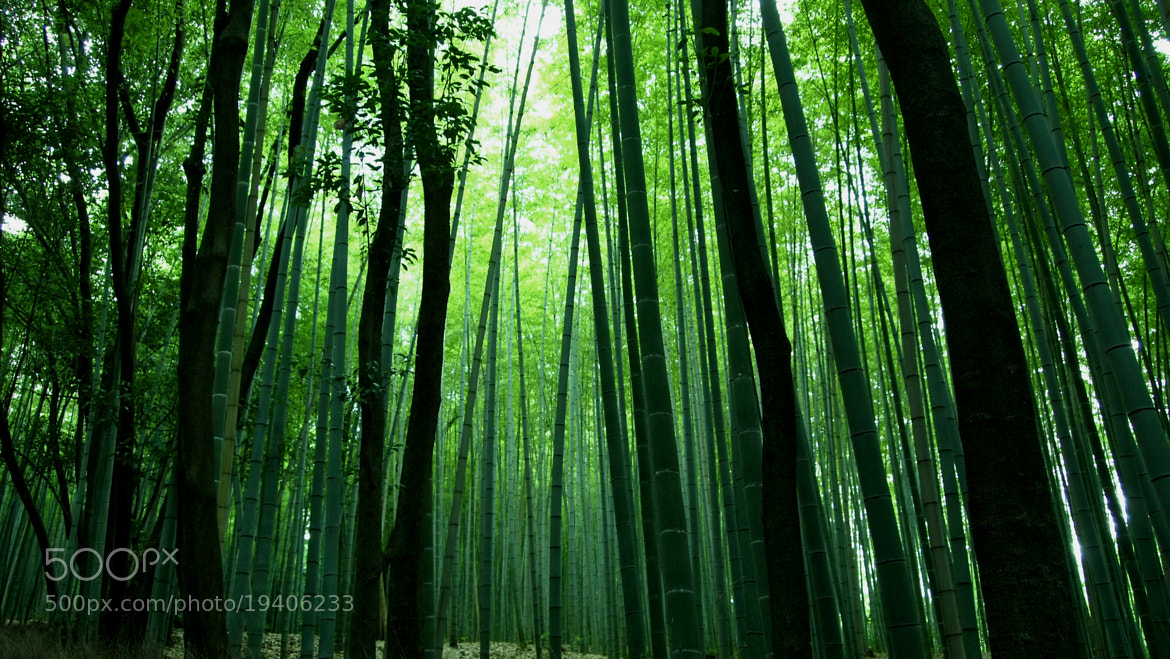 Photograph Bamboo forrest by Kai-shen Tan on 500px