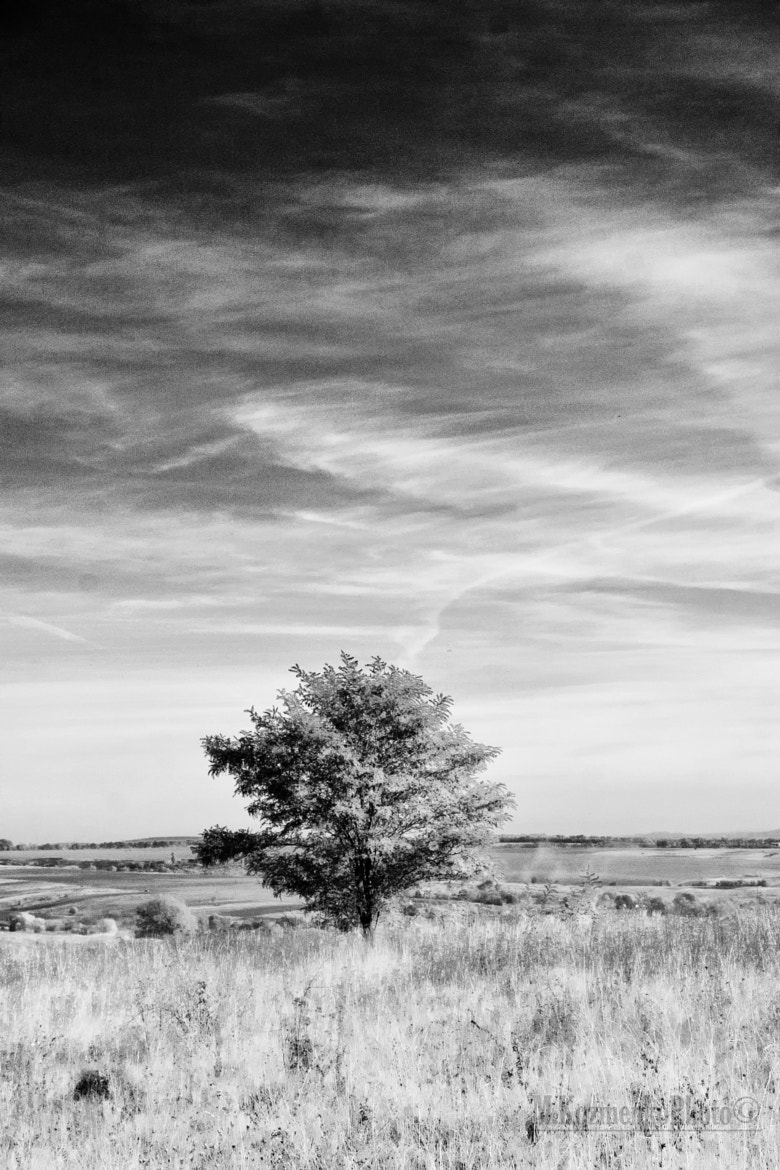 Photograph Picture of the Tree under the Sky by Max Kozmenko on 500px