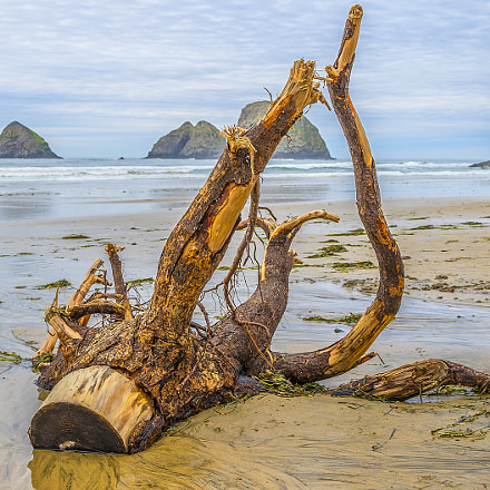 Dead tree on the, Canon EOS 7D MARK II, Canon EF 24mm f/1.4L II