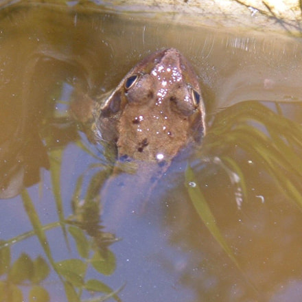 May Frog, Fujifilm FinePix A330