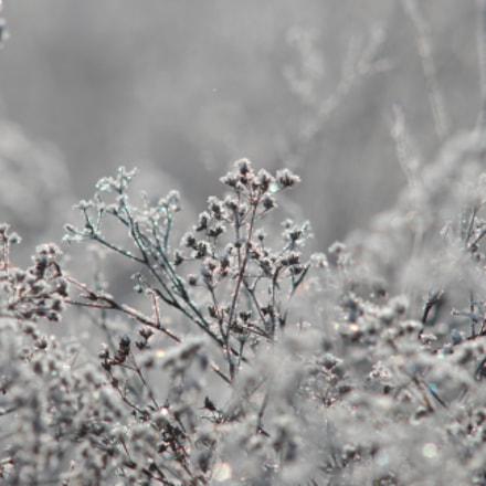 Frost, Nikon D200, Manual Lens No CPU