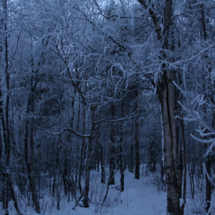 Enchanted forest, Canon EOS 1000D, Canon EF-S 18-55mm f/3.5-5.6 [II]