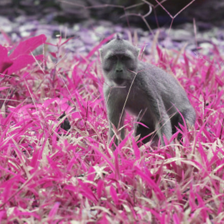 Pink grass, Canon EOS 60D, Canon EF 400mm f/4 DO IS