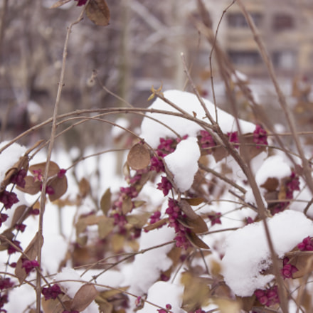Winter, Canon EOS 600D, Canon EF-S 18-55mm f/3.5-5.6 IS II