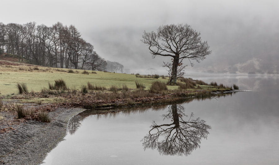 Crummock tree and shore