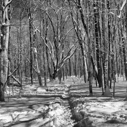 Winter Walk In The, Canon EOS REBEL T2I, Sigma 18-50mm f/2.8-4.5 DC OS HSM