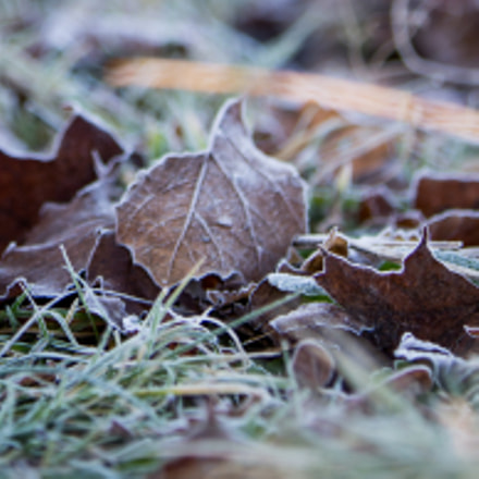 A Frosty Welcome, Canon EOS 6D, Canon EF 70-200mm f/2.8L IS