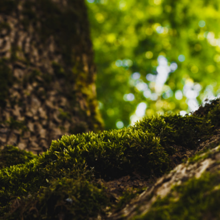 Moss, Canon EOS KISS X6I, Canon EF-S 18-55mm f/3.5-5.6 IS II