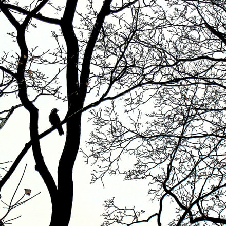 Lonely bird, Panasonic DMC-LC50