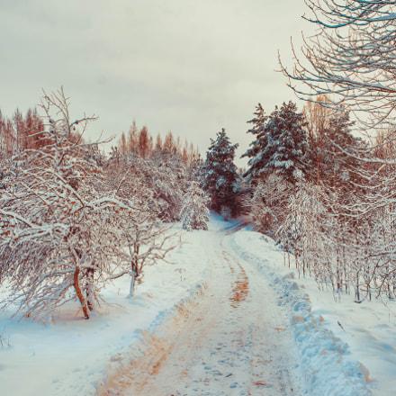 Дорожкой в лес