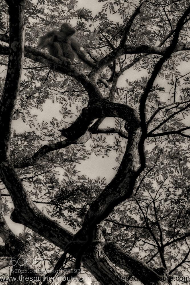 Photograph Birdy by regis boileau on 500px