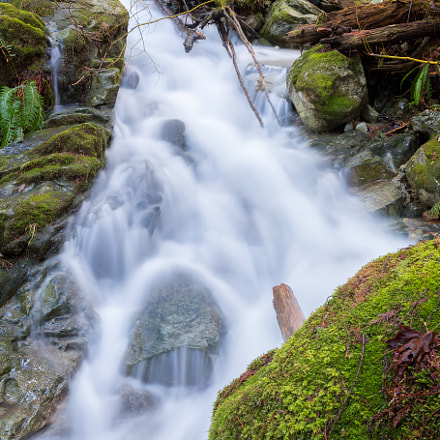 Forest Cascade, Canon EOS-1D X MARK II, Canon EF 35mm f/1.4L II USM